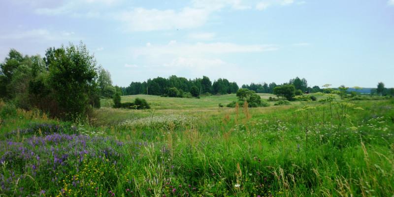 Bild eines Landschaftsausschnittes der Rominter Heide