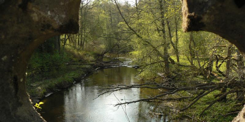 Bild eines Flusslaufs in der Rominter Heide