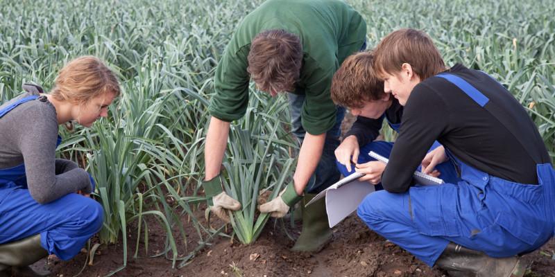 Bild von Jugendlichen in der Landwirtschaftsausbildung