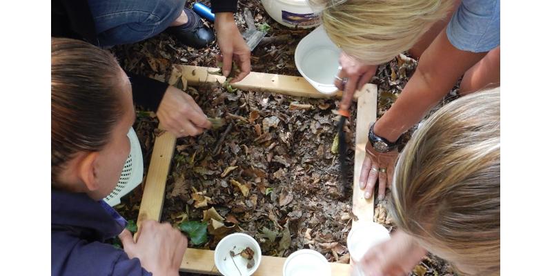 Teilnehmende machen gemeinsam elementare Beobachtungen und Erkundungen des Bodens an Hand eines selbst gewählten Ausschnittes der Bodenoberfläche