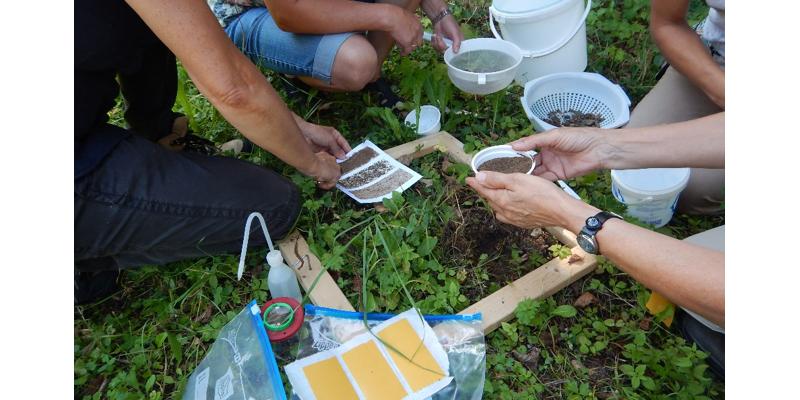 Teilnehmende machen gemeinsam elementare Beobachtungen und Erkundungen des Bodens an einem selbst gewählten Ausschnitt der Bodenoberfläche