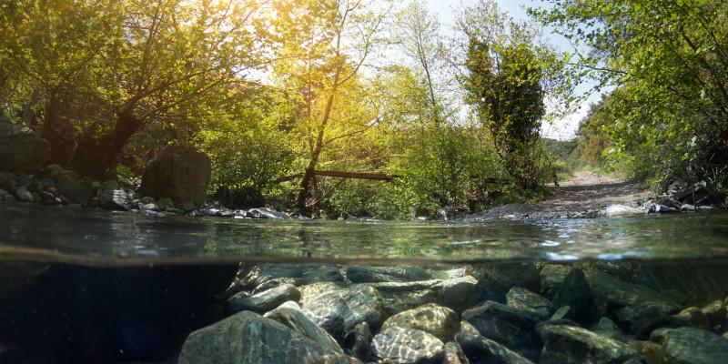 Foto: Eine natürliche Sohle eines grobmaterialreichen Baches mit Kies und Steinen. Das Ufer des Baches ist mit standorttypischen Gehölzen bewachsen.
