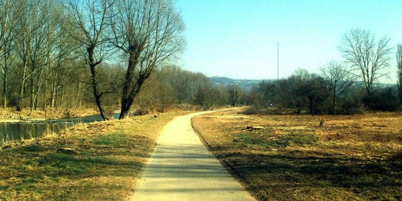 Foto: Befestigter Uferweg parallel zur Ahr. Am Ufer steht eine zweistämmige Weide.