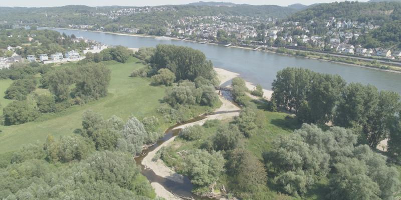 Luftbild der Ahrmündung. Im Vordergrund ist die Ahr mit mehreren Nebenarmen zu erkennen. An den Ufern finden sich viele Kiesbänke und Gehölze. Im Hintergrund liegt der Rhein mit mehreren Siedlungen.