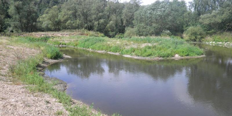 Foto: Eine Gewässerfläche mit Krautvegetation (Seitenarm) im Vordergrund und Bäumen im Hintergrund (Uferbewuchs der Fulda)