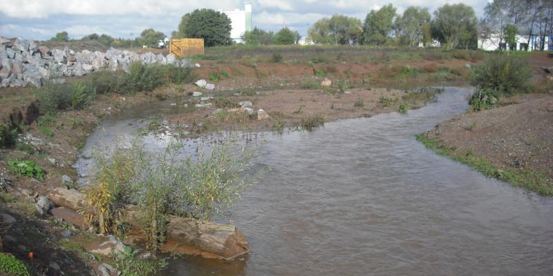 Foto: Am Ufer der Helme liegt ein Raubaum, der mit kleiner Vegetation bewachsen ist. In einer Weitung des Gewässers liegt mittig eine Insel aus Kies.