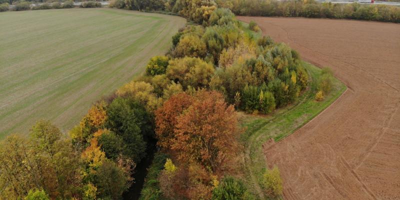 Luftbild des Gehölzstreifens an der Helme bei Sundhausen. Dichter Bewuchs mit Bäumen und Sträuchern liegt zwischen dem Gewässer und anliegenden landwirtschaftlichen Flächen.