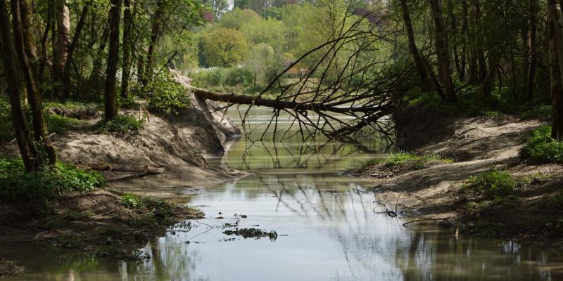 Foto: Eine Uferbucht mit Sturzbaum am Inn bei Langenpfunzen. Die Ufer sind dicht mit Gehölzen bewachsen. Im Hintergrund verläuft der Hauptstrom des Inns.