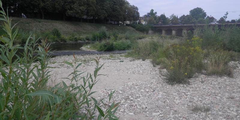 Foto: Eine Kiesbank mit aufkommender Vegetation an der Murg in Rastatt in der Nähe der Franzbrücke.