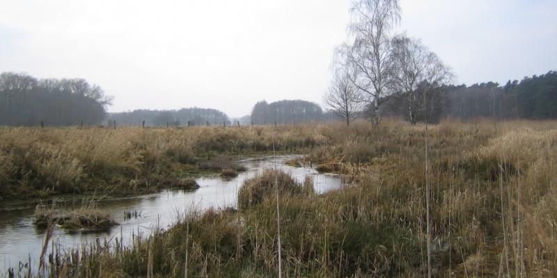 Foto: Die Nebel verläuft durch die neu gestaltete Landschaft. Im Gewässer liegen Störelemente in Form von Steinen und Vegetation. Entlang der Ufer hat sich eine dichte Vegetation aus Büschen, Gräsern und jungen Gehölzen entwickelt.