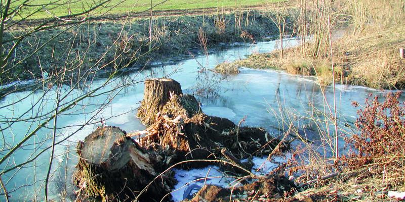 Foto: Drei Wurzelstöcke, die in das Gewässer eingebaut sind, bewirken in ihrem Unterwasser eine Auskolkung.