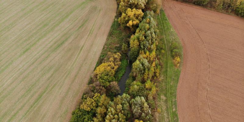 Luftbildaufnahme des wenige Meter breiten Randstreifens aus Bäumen und Sträuchern, die den Fluss Helme von landwirtschaftlichen Flächen abgrenzt.