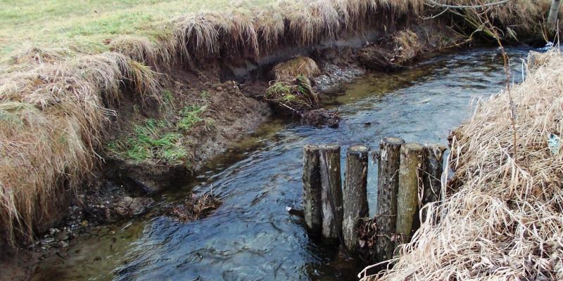 Foto: Seitlicher Blick auf kleinen Bach, in den einseitig eine Reihe von Holzpfählen quer zur Fließrichtung steht. Auf der gegenüberliegenden Seite ist das Ufer erodiert.