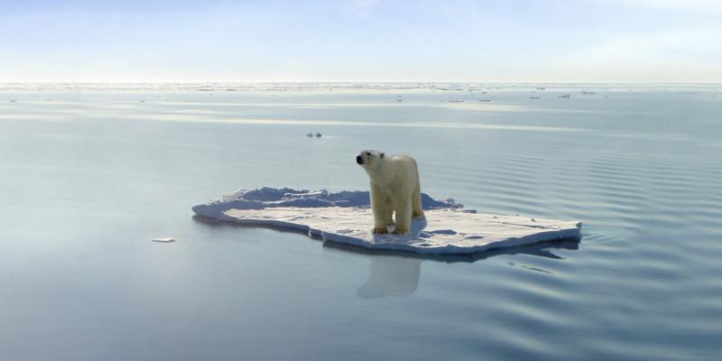 Eisbär auf Eisscholle