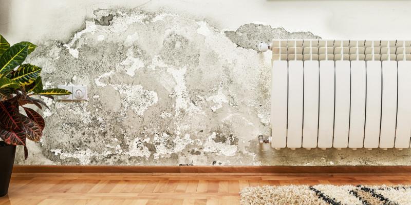 Schimmel und feuchte Wände in der Wohnung