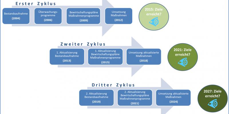 Schaubild: Zyklus der Wasserrahmenrichtlinie