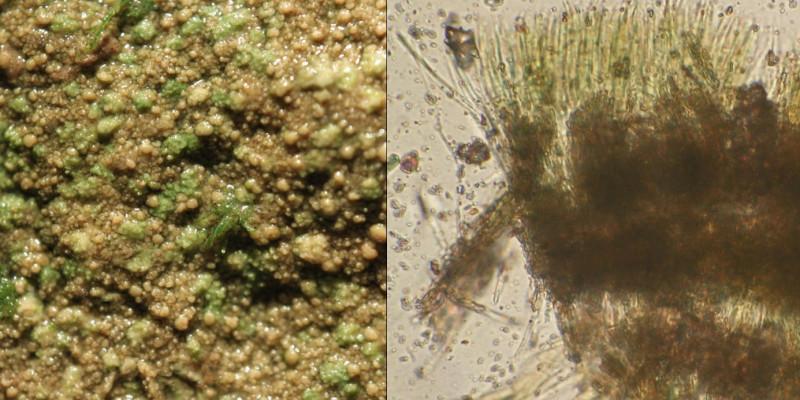 Bilder einer Alge