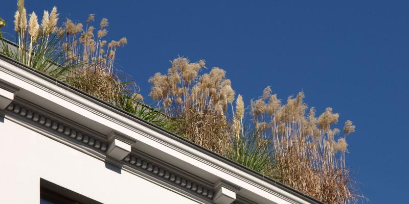 Pflanzen auf einem Hausdach