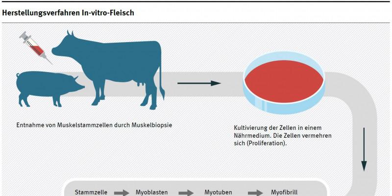 Diagramm Herstellungsverfahren In-vitro-Fleisch