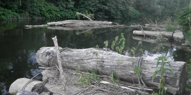 Foto: Gezielt eingebrachte und befestigte Totholz-Baumstämme in der Ruhr. Sie erhöhen die Strömungsdiversität und Strukturvielfalt. Die Ufer sind dicht bewachsen.