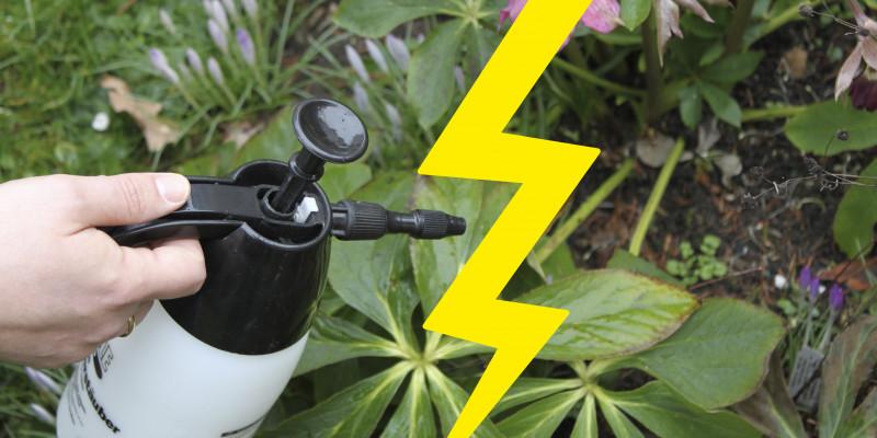 Einsatz von Insektizid mit einem Blitz