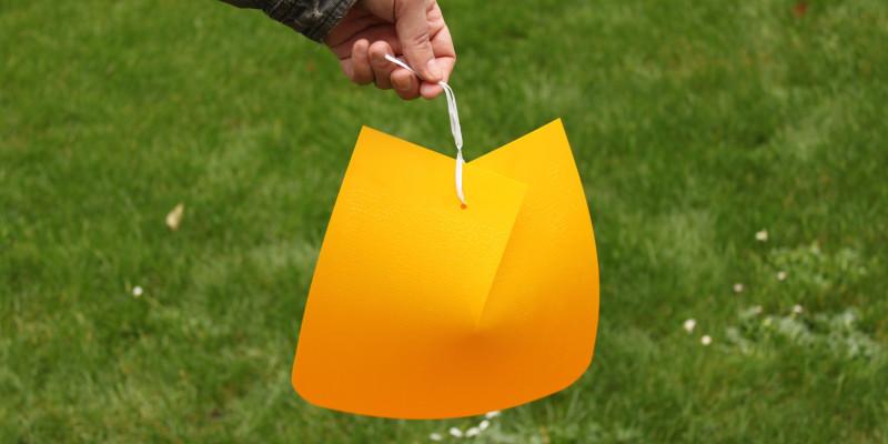 Eine gelbe Kirschfruchtfliegenfalle