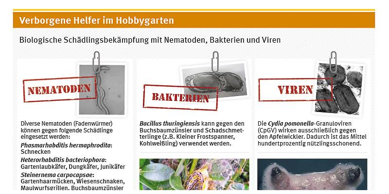 Biologische Schädlingsbekämpfung mit Nematoden, Bakterien und Viren