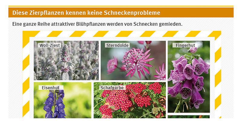 Zierpflanzen gegen Schneckenprobleme