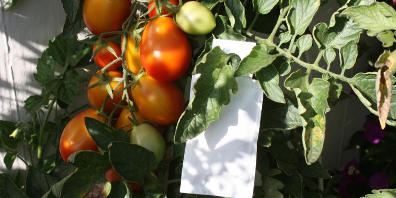 Gegen Thripsen hilft es einfach ein Tütchen mit Raubmilben an die Pflanze zu hängen