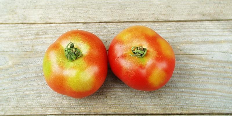 2 Tomaten mit Grünkragen auf hölzernem Untergrund