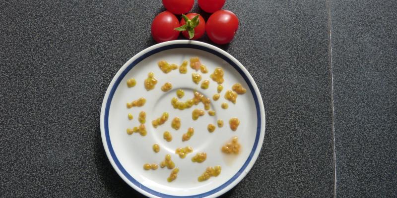 Tomatensamen auf Untertasse, daneben vier reife Tomaten