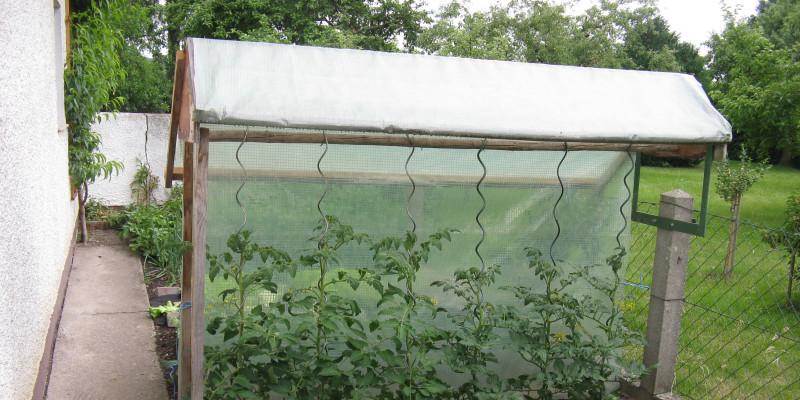 Tomatenpflanzen unter Tomatendach