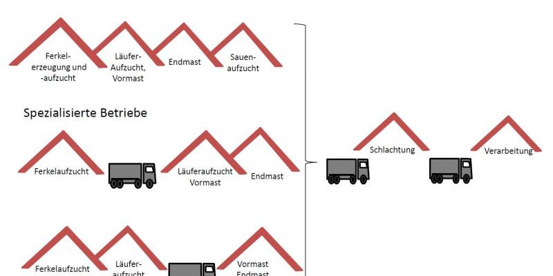 Schematische Darstellung verschiedener Herstellerketten der Schweinefleischerzeugung. Es werden zwei Formen spezialisierter Betriebe und ein Kombi-Betrieb dargestellt.