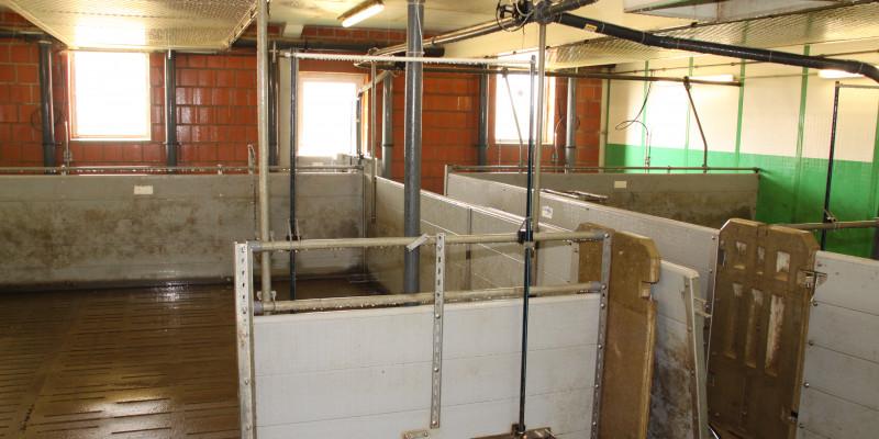 Das Foto zeigt einen leeren, mit Desinfektionsmittel behandelten, noch nassen Schweinestall.