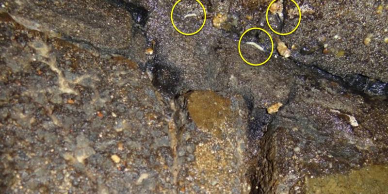 Risse in einer Wand, besiedelt mit Fliegenlarven. Diese können wie Würmer und Wurmlarven dort überleben.