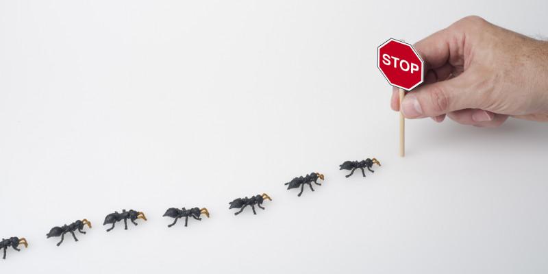 Ameisen werden gestoppt