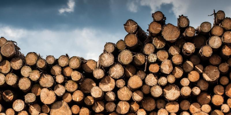 Holzstämme liegen aufgereiht auf einem Stapel.