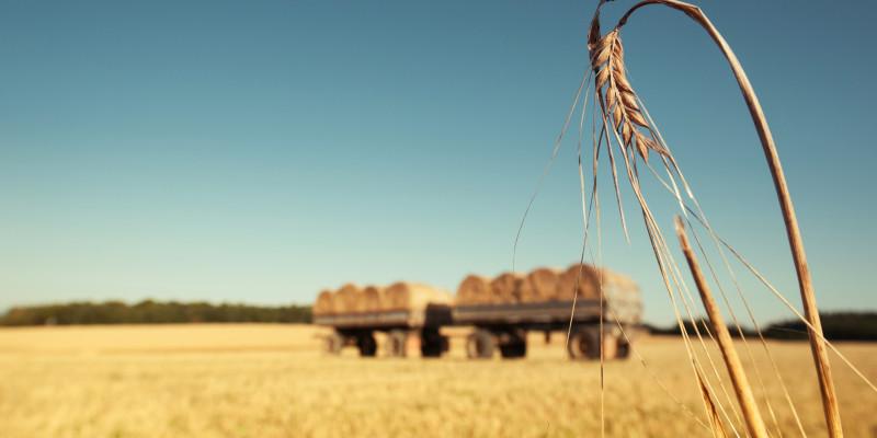 Stopelacker mit landwirtschaftlichem Anhänger der mit Strohballen beladen ist - im Vordergrund steht noch eine einzelne Ähre