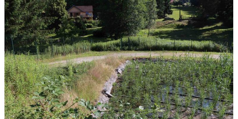 Ein Gemüsebeet auf einem Berg von der Sonne angestrahlt. Im Hintergrund ein privates Grundstück mit Haus und Bäumen.