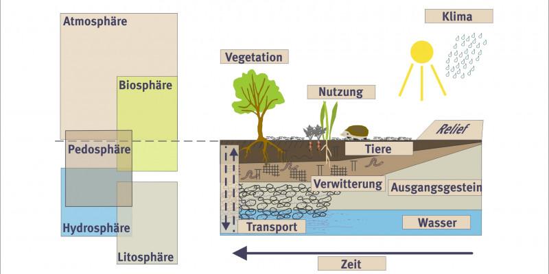 Schema Entwicklung von Böden