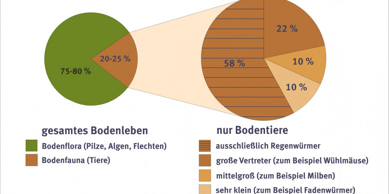 Chart showing the allocation of soil creatures.