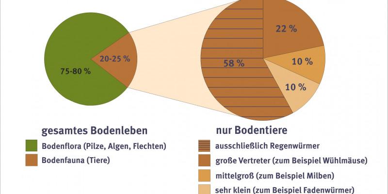 Schaubild zur Verteilung der Bodenlebewesen.