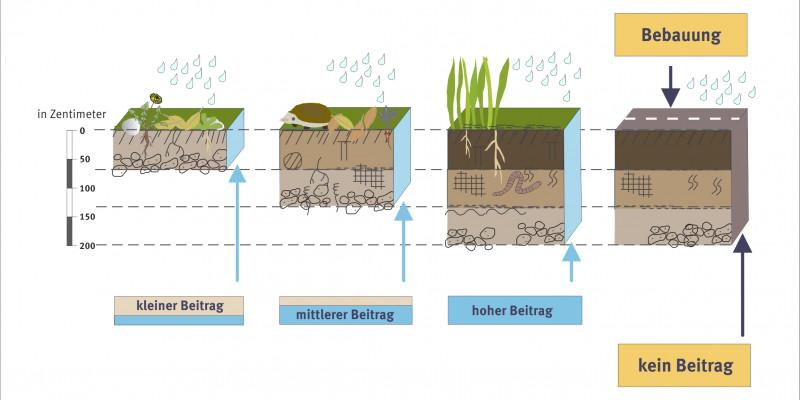 Schema Boden als Wasserspeicher
