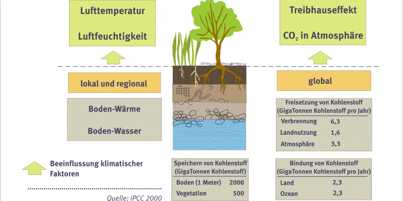 Soils have an influence on the climate.