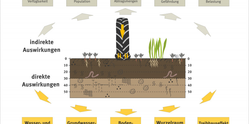 Graph about the impacts of soil compaction.