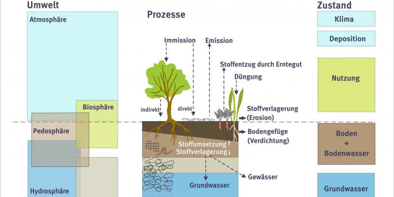 Schaubild: Die Bodendauerbeobachtung ist ein zentrales Instrument der Umweltbeobachtung