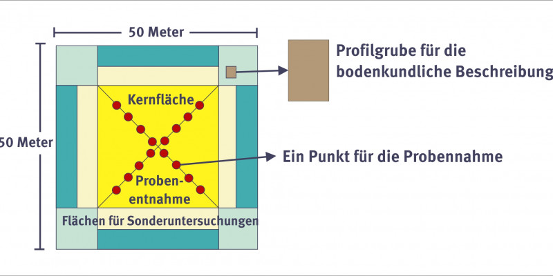 The measuring surface of the permanent soil observation is 50 x 50 meters.