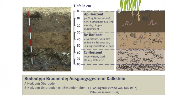 Soil and its structure