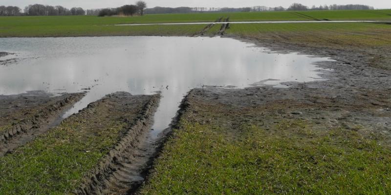 Stauwasserboden boden des jahres umweltbundesamt for Boden zusammensetzung