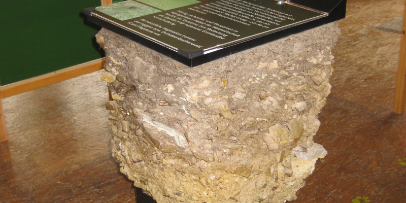 Photo of a soil monolith